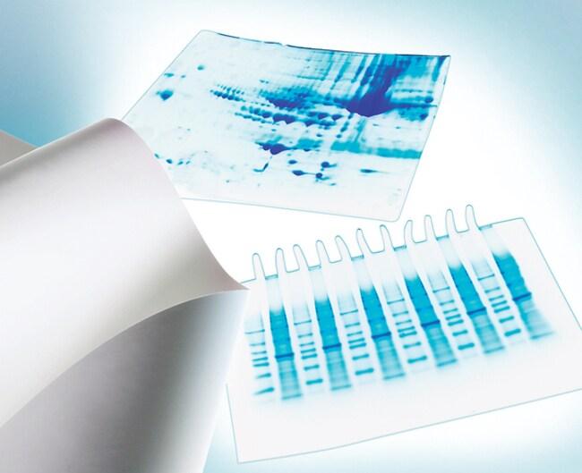 MilliporeSigma™Immobilon-E Transfer Membrane Easily wetted with water; 7cm x 8.4cm; Quantity:50 MilliporeSigma™Immobilon-E Transfer Membrane